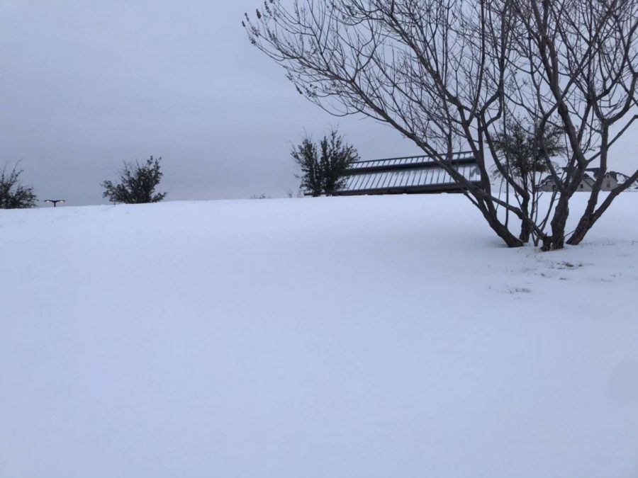 Texas receives inches of snow just overnight, covering its usually dry ground with a layer of white.